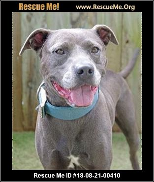 Florida Pit Bull Rescue Adoptions Rescue Me