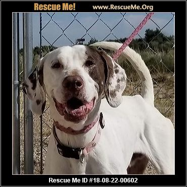 Colorado German Shorthaired Pointer Rescue Adoptions Rescue Me