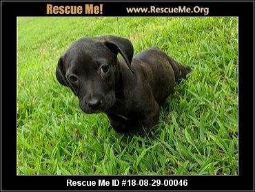 Ruff Dog Rescue North East - Thompson, PA - AVAILABLE PETS