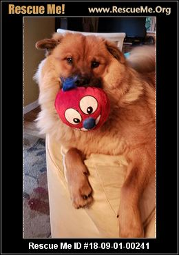 Keeshond Rescue California - Marcpous