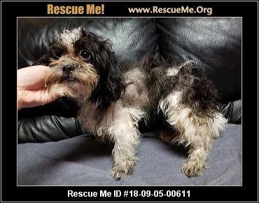 Kentucky Shih Tzu Rescue Adoptions Rescue Me