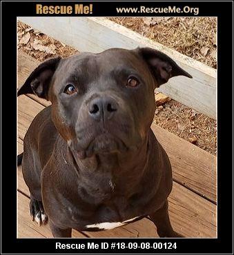 Virginia Pit Bull Rescue - ADOPTIONS - Rescue Me!
