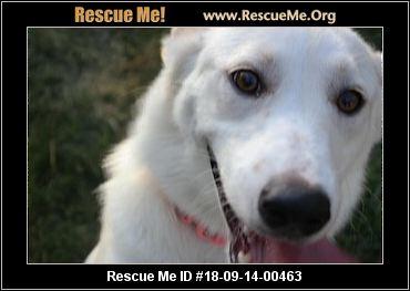 Ohio Border Collie Rescue - ADOPTIONS - Rescue Me!
