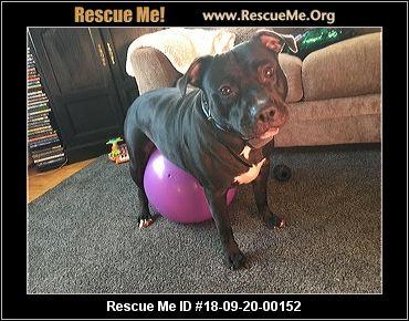 Connecticut Pit Bull Rescue - ADOPTIONS - Rescue Me!