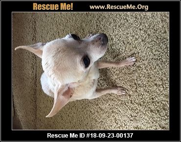 tennessee dog rescue adoptions rescue me