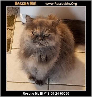 Missouri Cat Rescue - ADOPTIONS - Rescue Me!