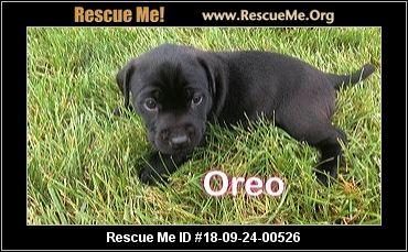 Wisconsin Lab Rescue - ADOPTIONS - Rescue Me!