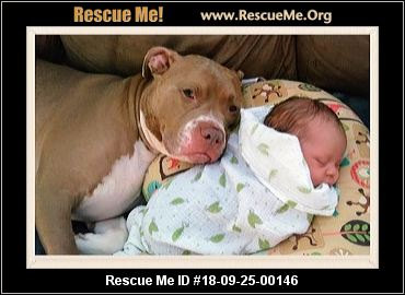 Kentucky Pit Bull Rescue - ADOPTIONS - Rescue Me!