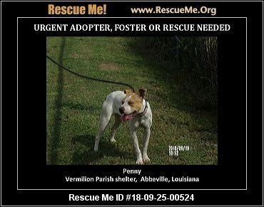 Louisiana Pit Bull Rescue - ADOPTIONS - Rescue Me!