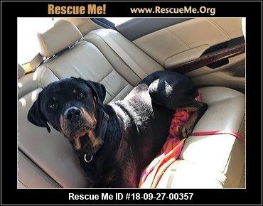 New Mexico Rottweiler Rescue Adoptions Rescue Me
