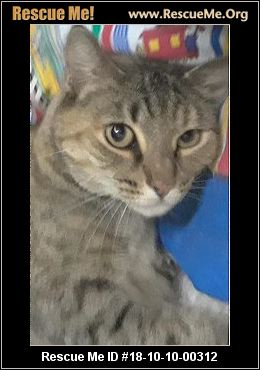 Abyssinian Cat Arizona