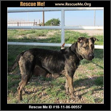 - Colorado Dog Rescue ...