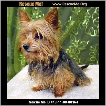 Dog Rescue Mchenry County Il