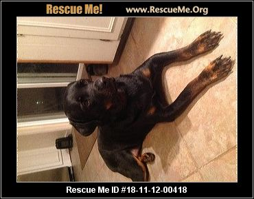Virginia Rottweiler Rescue Adoptions Rescue Me