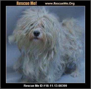 New York Shih Tzu Rescue Adoptions Rescue Me