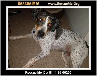 Florida Catahoula Rescue Adoptions Rescue Me