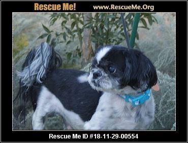 Utah Shih Tzu Rescue Adoptions Rescue Me