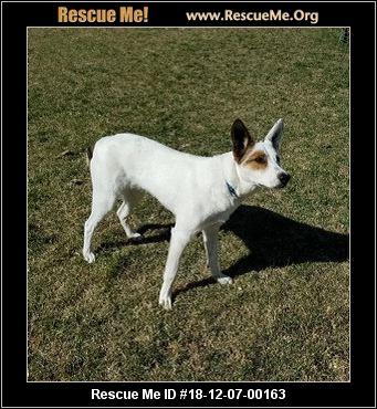 Utah Dog Rescue - ADOPTIONS - Rescue Me!
