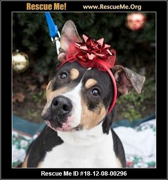 New Jersey Pit Bull Rescue - ADOPTIONS - Rescue Me!