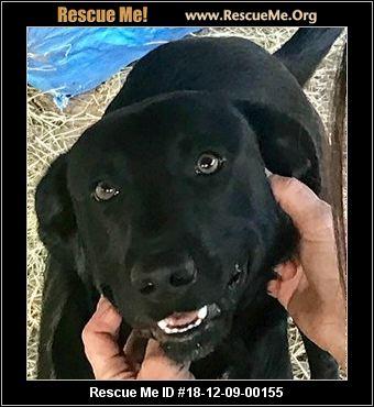 Rhode Island Dog Rescue - ADOPTIONS - Rescue Me!