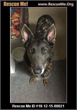 Dancing Dog Rescue Denver Co Available Pets