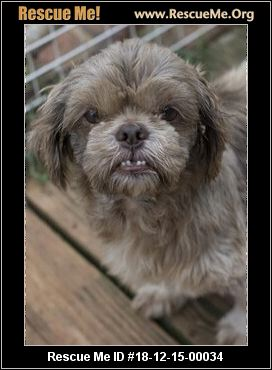 North Carolina Shih Tzu Rescue Adoptions Rescue Me