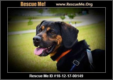 Florida Rottweiler Rescue Adoptions Rescue Me