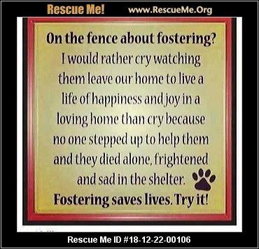 Oregon Vizsla Rescue - ADOPTIONS - Rescue Me!