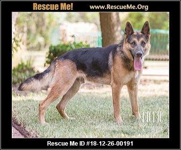 Texas German Shepherd Rescue Adoptions Rescue Me