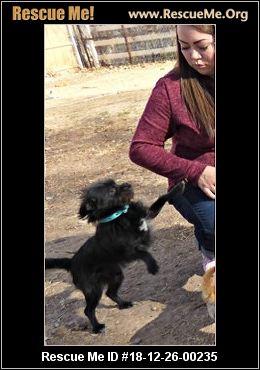 New Mexico Shih Tzu Rescue Adoptions Rescue Me