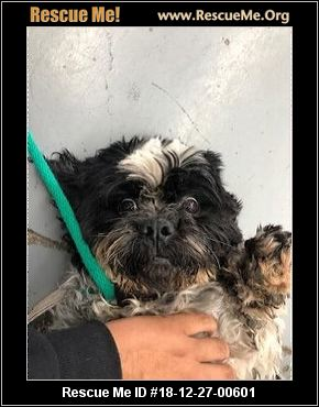 California Shih Tzu Rescue Adoptions Rescue Me