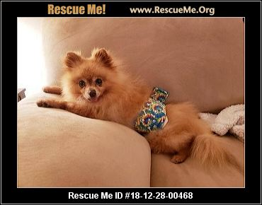 Recycled Pomeranians Bcs College Station Tx Available Pets