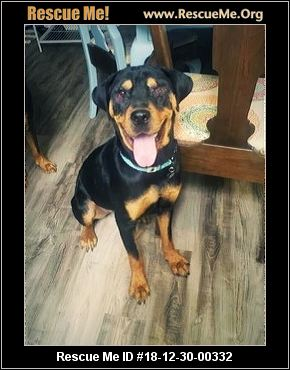 Texas Rottweiler Rescue Adoptions Rescue Me