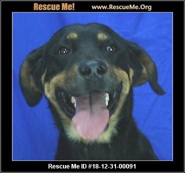 Colorado Rottweiler Rescue Adoptions Rescue Me