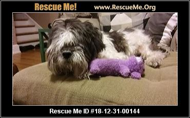 Illinois Shih Tzu Rescue Adoptions Rescue Me