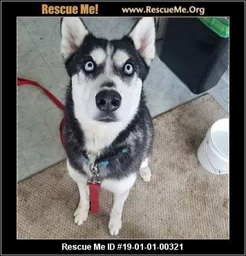 - Oregon Mutt Rescue - ADOPTIONS - Rescue Me!