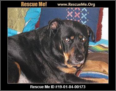 California Rottweiler Rescue Adoptions Rescue Me