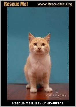 Georgia Cat Rescue Adoptions Rescue Me