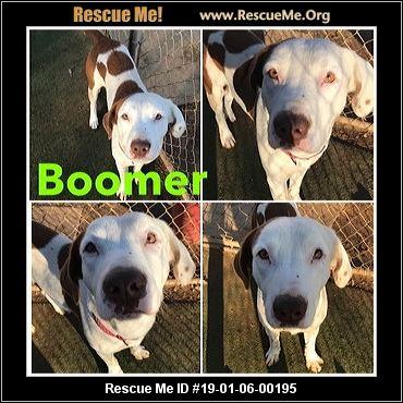 Oregon Basset Hound Rescue Adoptions Rescue Me
