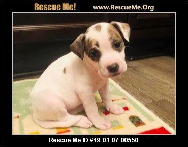 Kansas Dog Rescue Adoptions Rescue Me