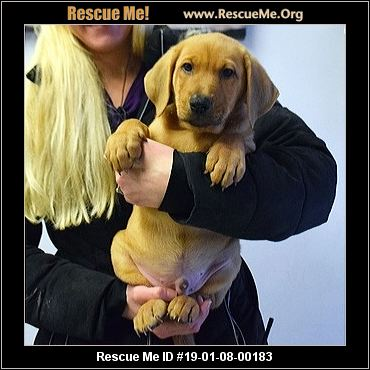 Illinois Dog Rescue Adoptions Rescue Me
