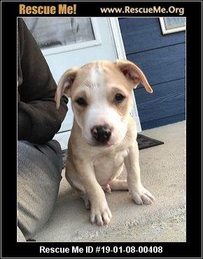 Colorado Dog Rescue Adoptions Rescue Me