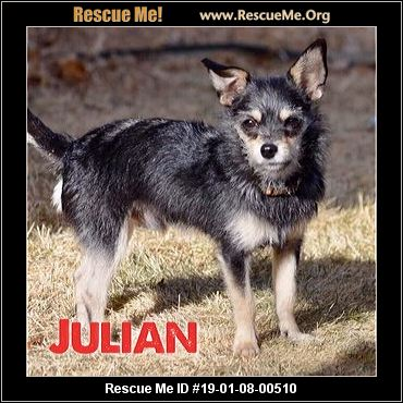 Colorado Yorkie Rescue Adoptions Rescue Me