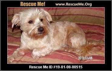 Georgia Yorkie Rescue Adoptions Rescue Me