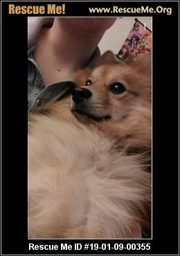 Indiana Dog Rescue Adoptions Rescue Me