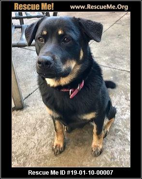 Washington Rottweiler Rescue Adoptions Rescue Me
