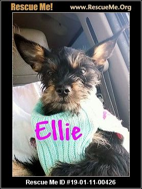 California Yorkie Rescue Adoptions Rescue Me