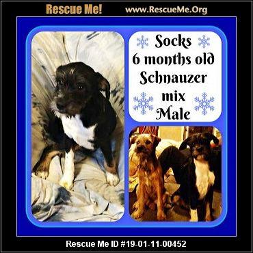 Kansas Schnauzer Rescue Adoptions Rescue Me