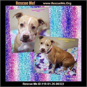 North Carolina Pit Bull Rescue Adoptions Rescue Me
