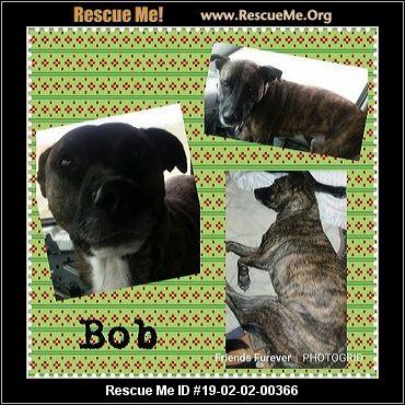 Idaho German Shepherd Rescue Adoptions Rescue Me
